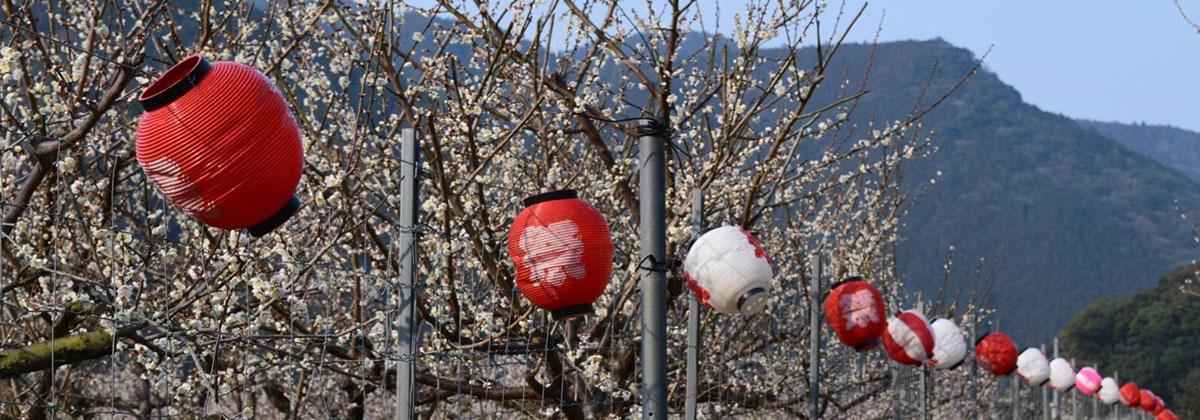 三重県熊野市地域活性化活動