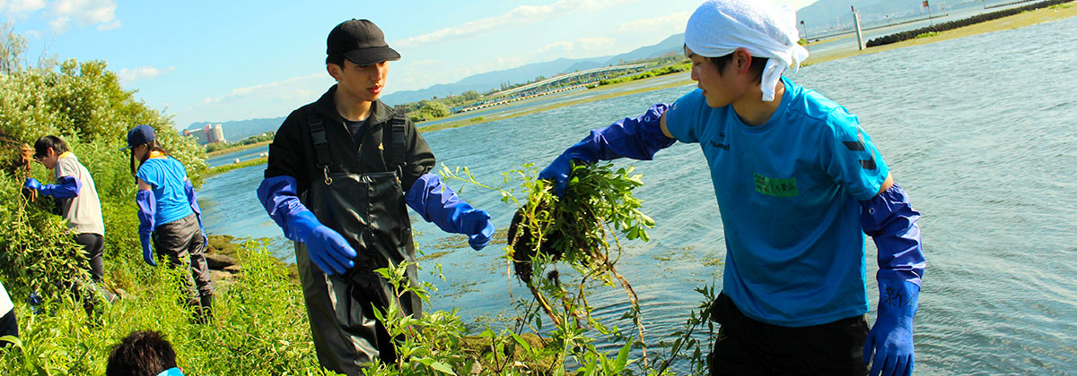 琵琶湖オオバナミズキンバイ除去活動