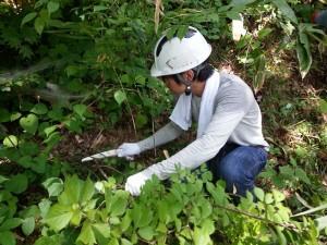 長野森林整備活動2